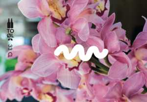 Tropical Rumble